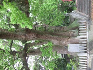 japon  (184)