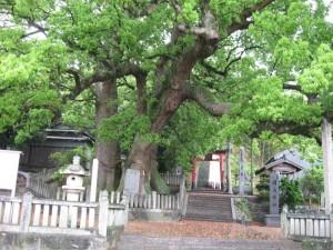 japon  (185)