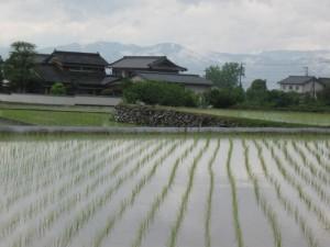 japon  (195)