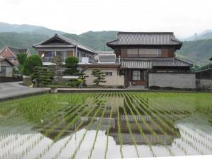 japon  (240)