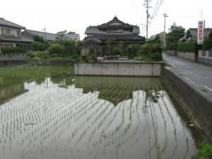 japon  (259)