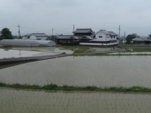 japon  (291)