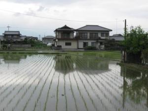 japon  (366)