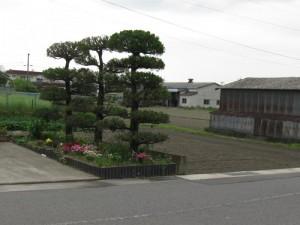 japon  (367)