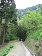 japon  (498)