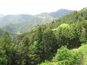 japon  (543)