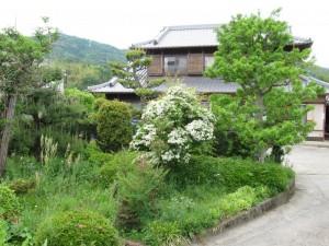 japon  (586)