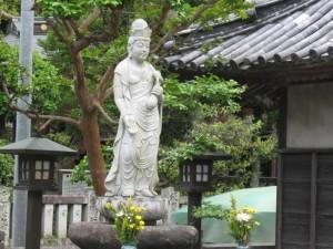 japon  (595)