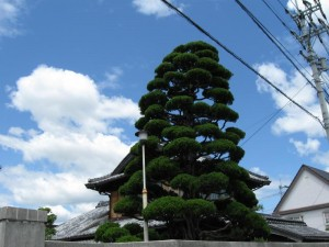japon  (651)