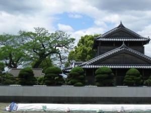 japon  (654)