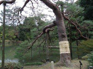 Japon 2015 0018